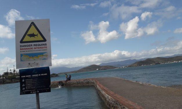 New Caledonia's South Province kills 24 sharks