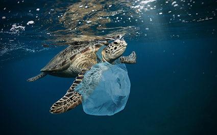 Waste : Polynesia is behind…